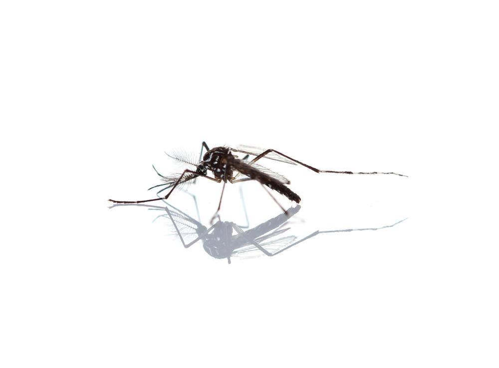 Chikungunya (Para Pacientes y Md)